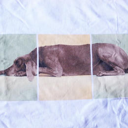 90's USA製 William Wegman Weimaraner フォト Tシャツ
