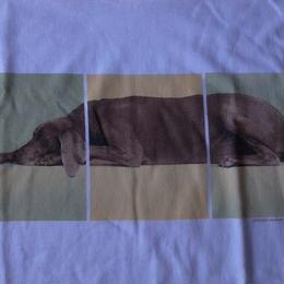William Wegman オールド・LYING DOG・フォト・Tシャツ サイズ・M