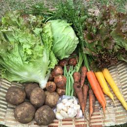 7月27日引取日。津久井地域内引き取り限定コース①1回だけのお野菜セット。相模原市緑区で引き取り可能な方。