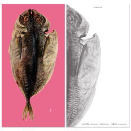 加藤休ミ おいしい魚 ポストカード(あじの開き)