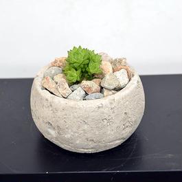 ハオルチア ナユタ 平鉢