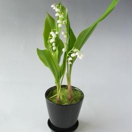 【送料込み】スズランの鉢植え 1POT