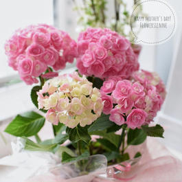 母の日ギフト ピンクの紫陽花鉢植え 3500円