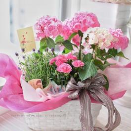 母の日 紫陽花とラベンダーの寄せ籠(鉢植え) 5400円