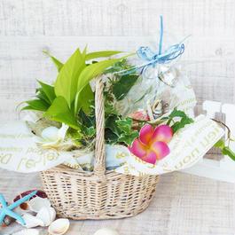Summer gift/ミニ観葉とガラスのメッセージボトルセット