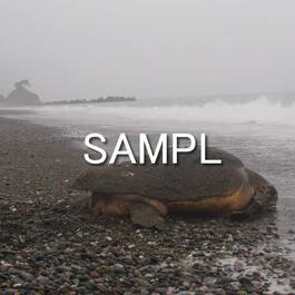 海亀(2)