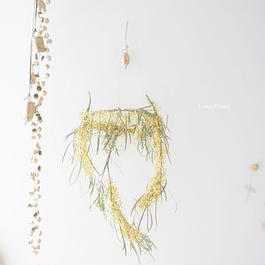 Mimosa dried flower of wind chimes Ⅱ