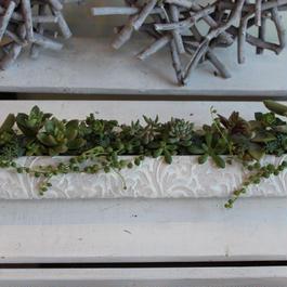 多肉植物 寄せ植え ロング