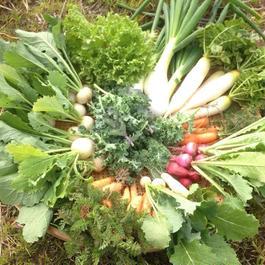 季節の有機野菜セット