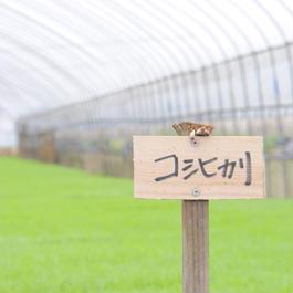 近江吉田屋コシヒカリ 10kg