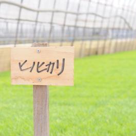 近江吉田屋ヒノヒカリ 10kg