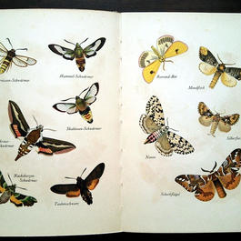 ◆ドイツ インゼル文庫Nr.724<美しい蛾の本>◆Das kleine Buch der Nachtfalter