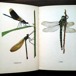 ◆ドイツ インゼル文庫Nr.724<小さな昆虫図鑑>◆Das kleine Insektenbuch