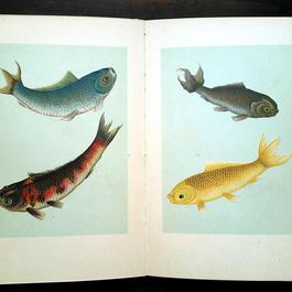 ◆ドイツ インゼル文庫Nr.255<小さな金魚の本>◆Der kleine Goldfischteich