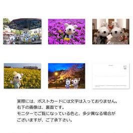 ポストカード・春(5枚セット)