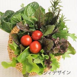 春のお祝いギフト野菜ブーケ・バスケットにたっぷりのフレッシュ野菜をつめて