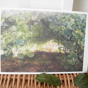 postcard / キウィ畑