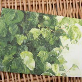 postcard / 重なる葉