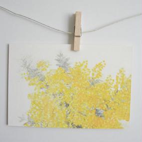 postcard / mimosa 2