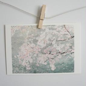 postcard / sakura 2