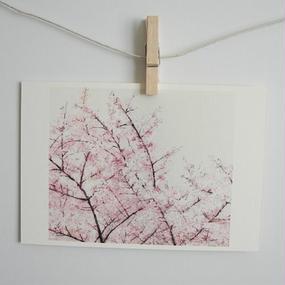 postcard / sakura 1