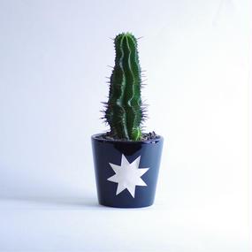 ユーフォルビア ポリゴナ Euphorbia horrida