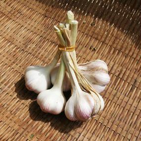 【食】完全無農薬 うきの有機栽培  「にんにく」5玉セット100g(熊本県宇城産 数量限定)