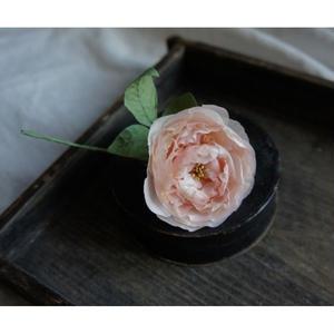 rose de bouton