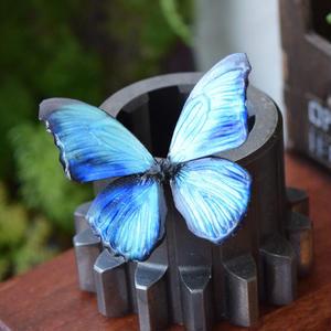 蝶のマグネット メネラウスモルフォ Turquoise 2Ssize