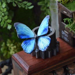蝶のマグネット メネラウスモルフォ Turquoise Msize