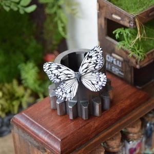 蝶のマグネット 大胡麻斑  3Ssize