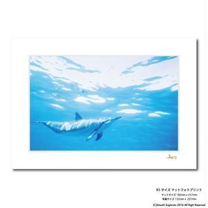 """""""Kona Dolphin""""マットプリント"""