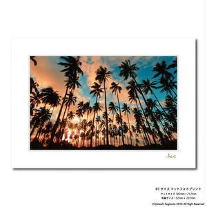 """""""Kauai Palm Tree""""マットプリント"""