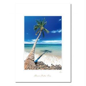 """Maui Palm Tree""マットプリント"