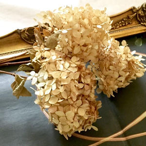 Dried flower's* ノリウツギ /  M*size assort