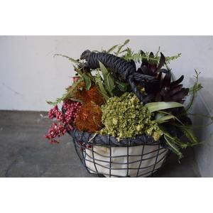 Basket flower.