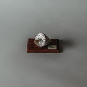 Natsumi Ito / Spiral shell specimen