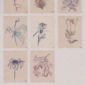 8 Assorted blank postcards / Lucy Auge