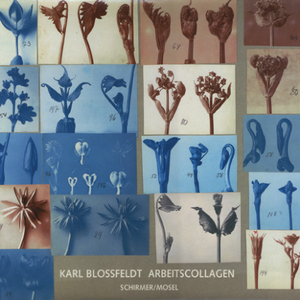 Working Collages / Karl Blossfeldt