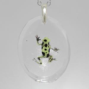 マダラヤドクガエル(frog031)