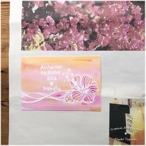 Hibiscus Aloha mai no,aloha aku