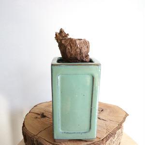 ペラルゴニウム  トリステ  no.003    Pelargonium triste