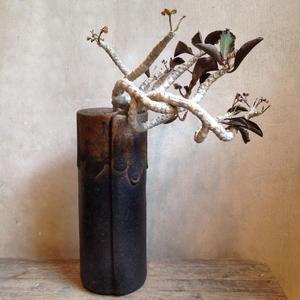 ユーフォルビア    フランコイシー     no.02    Euphorbia francoisii