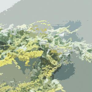 Desktop Wall Paper [ March_mimoza ]