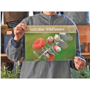 2019 オーストラリア ワイルドフラワーカレンダー