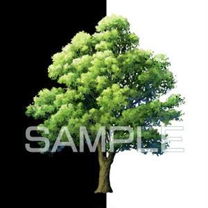 素材_中景の木03