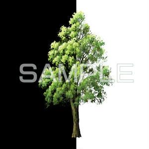 素材_中景の木01