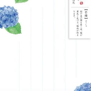 HK107旬花 はがき 紫陽花