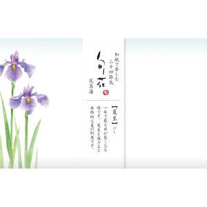 KK145旬花 懐紙 花菖蒲