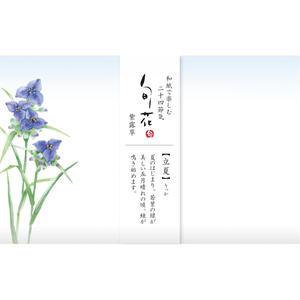 KK142旬花 懐紙 紫露草